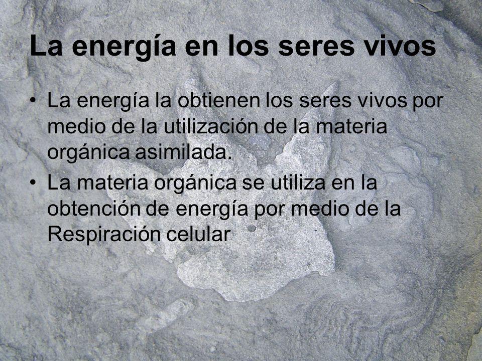 La energía en los seres vivos