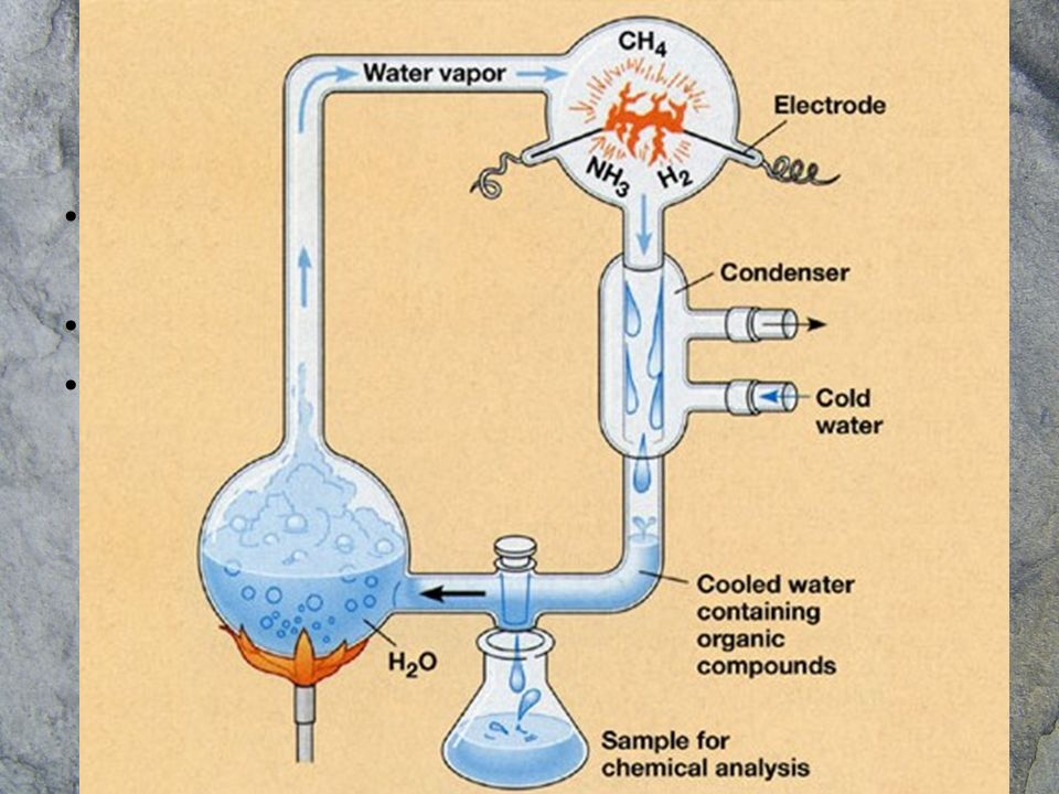 En el océano primitivo (la sopa prebiótica) había moléculas orgánicas.