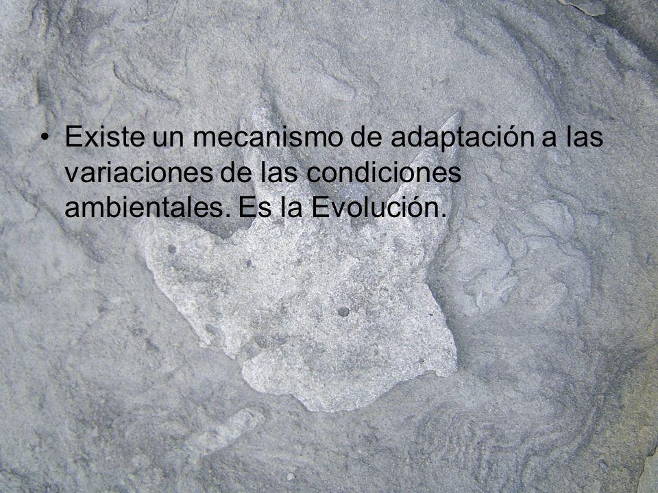 Existe un mecanismo de adaptación a las variaciones de las condiciones ambientales. Es la Evolución.