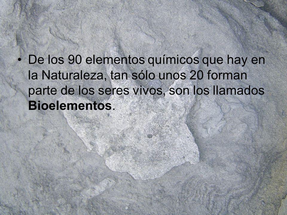 De los 90 elementos químicos que hay en la Naturaleza, tan sólo unos 20 forman parte de los seres vivos, son los llamados Bioelementos.