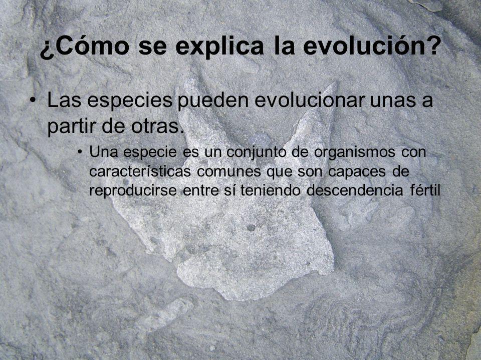 ¿Cómo se explica la evolución