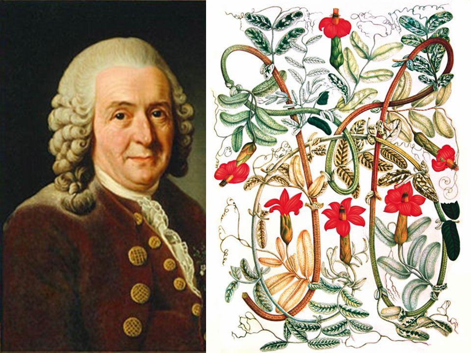 Historia de las teorías evolutivas