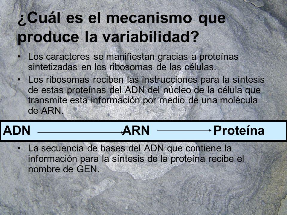¿Cuál es el mecanismo que produce la variabilidad