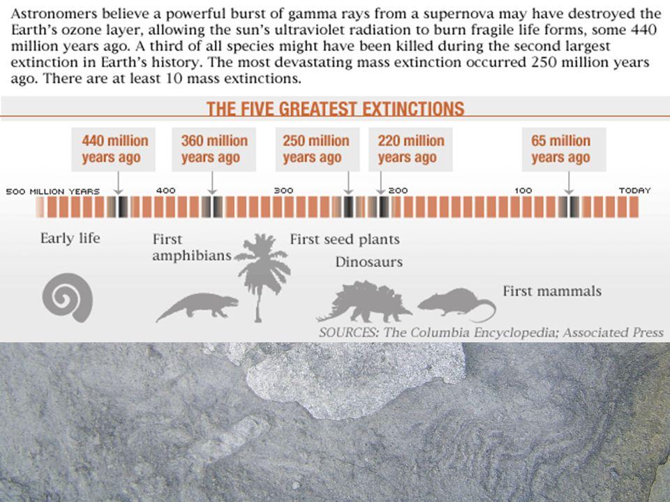 ExtincionesAunque constantemente se están extinguiendo especies hay períodos en los que estas extinciones son más masivas.