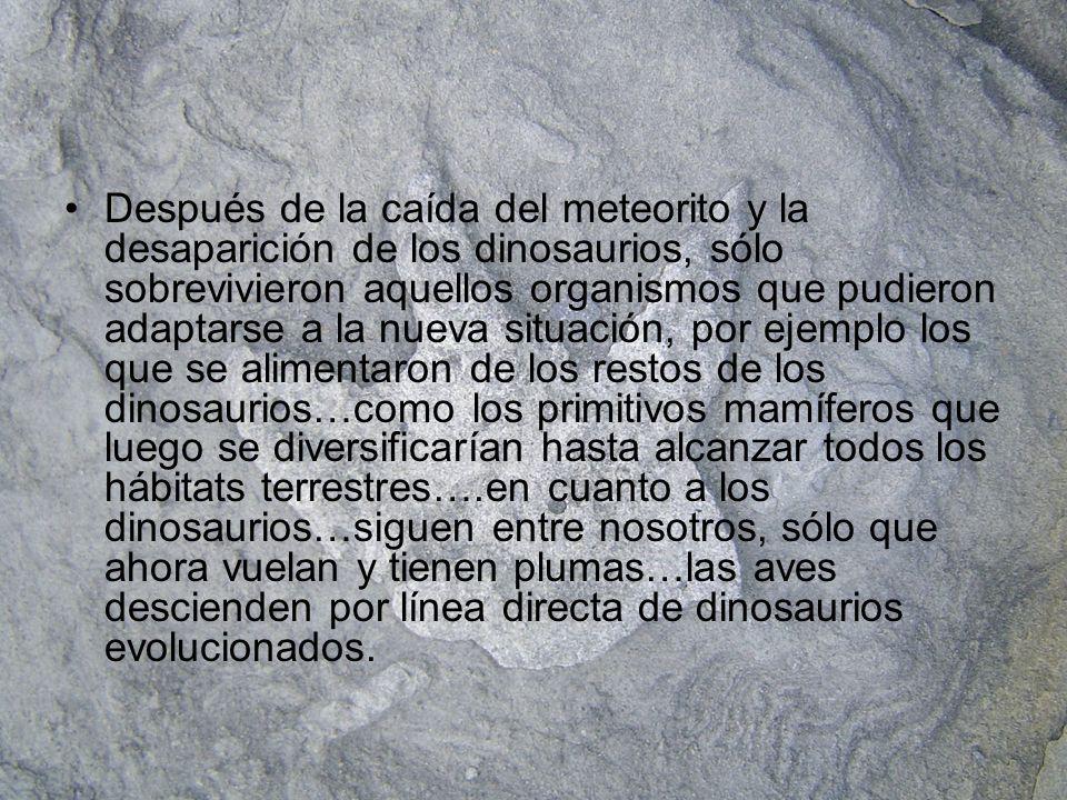 Después de la caída del meteorito y la desaparición de los dinosaurios, sólo sobrevivieron aquellos organismos que pudieron adaptarse a la nueva situación, por ejemplo los que se alimentaron de los restos de los dinosaurios…como los primitivos mamíferos que luego se diversificarían hasta alcanzar todos los hábitats terrestres….en cuanto a los dinosaurios…siguen entre nosotros, sólo que ahora vuelan y tienen plumas…las aves descienden por línea directa de dinosaurios evolucionados.