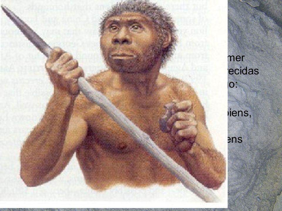 Hace 1,2 millones de años aparece el primer homínido con características bípedas parecidas al hombre actual, además domina el fuego: Homo erectus