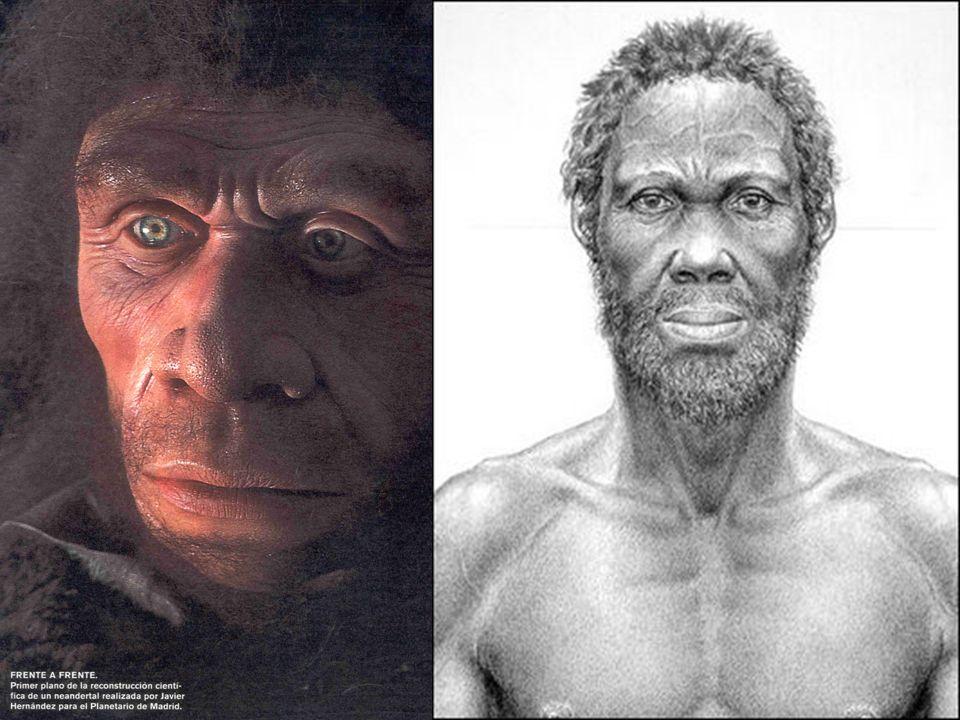 El homo sapiens neanderthalensis adaptado al frío de las glaciaciones apareció hace 200.000 años y se extendió fundamentalmente por Europa desapareciendo hace aproximadamente 25.000 años