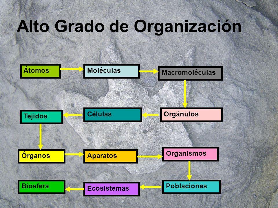 Alto Grado de Organización