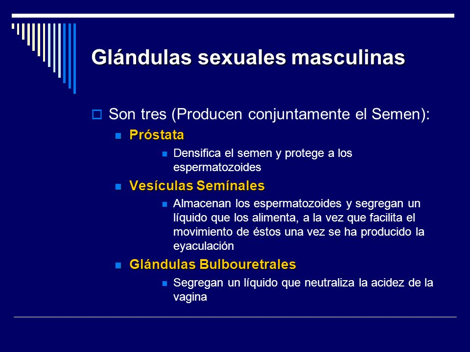 Glándulas sexuales masculinas