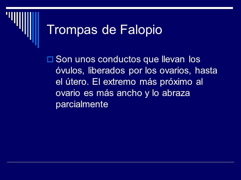 Trompas de Falopio