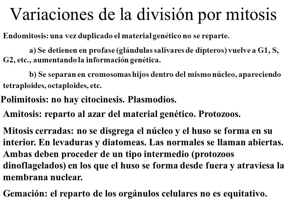 Variaciones de la división por mitosis