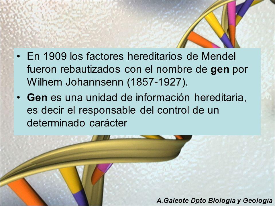 En 1909 los factores hereditarios de Mendel fueron rebautizados con el nombre de gen por Wilhem Johannsenn (1857-1927).