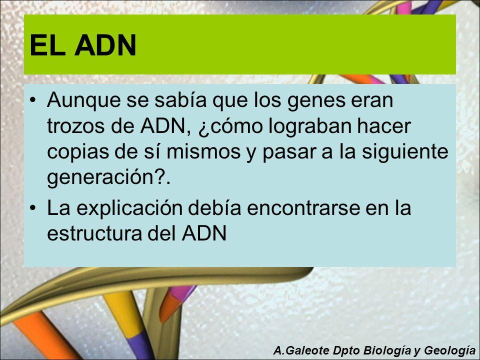EL ADN Aunque se sabía que los genes eran trozos de ADN, ¿cómo lograban hacer copias de sí mismos y pasar a la siguiente generación .