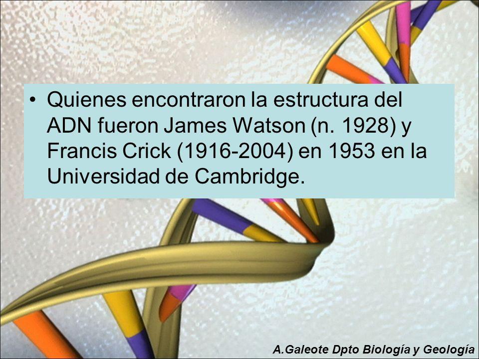 Quienes encontraron la estructura del ADN fueron James Watson (n