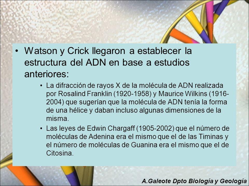 Watson y Crick llegaron a establecer la estructura del ADN en base a estudios anteriores: