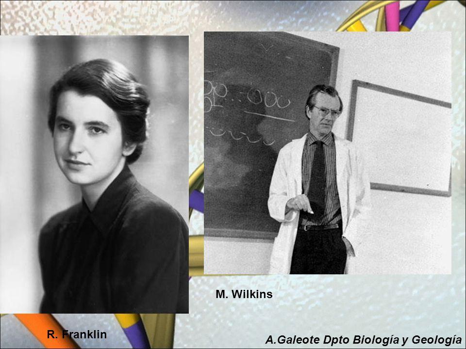 M. Wilkins R. Franklin A.Galeote Dpto Biología y Geología