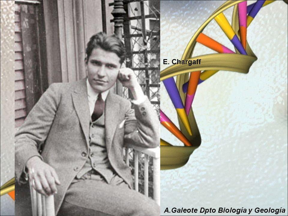 E. Chargaff A.Galeote Dpto Biología y Geología