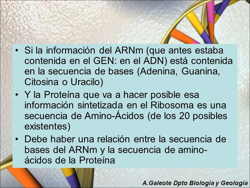 Si la información del ARNm (que antes estaba contenida en el GEN: en el ADN) está contenida en la secuencia de bases (Adenina, Guanina, Citosina o Uracilo)