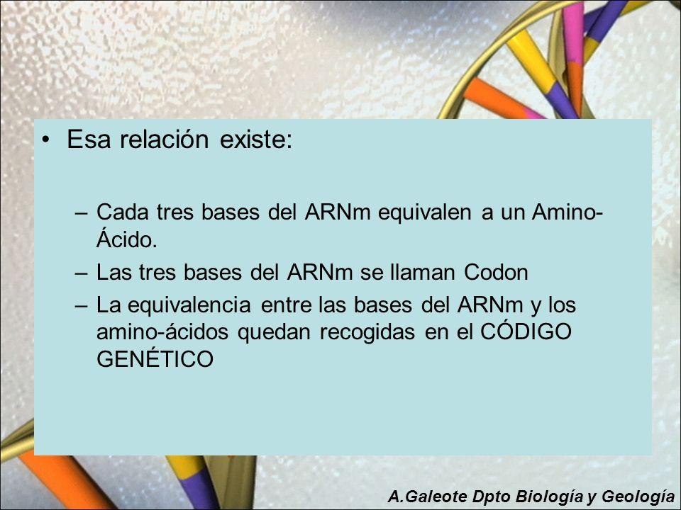 Esa relación existe: Cada tres bases del ARNm equivalen a un Amino-Ácido. Las tres bases del ARNm se llaman Codon.