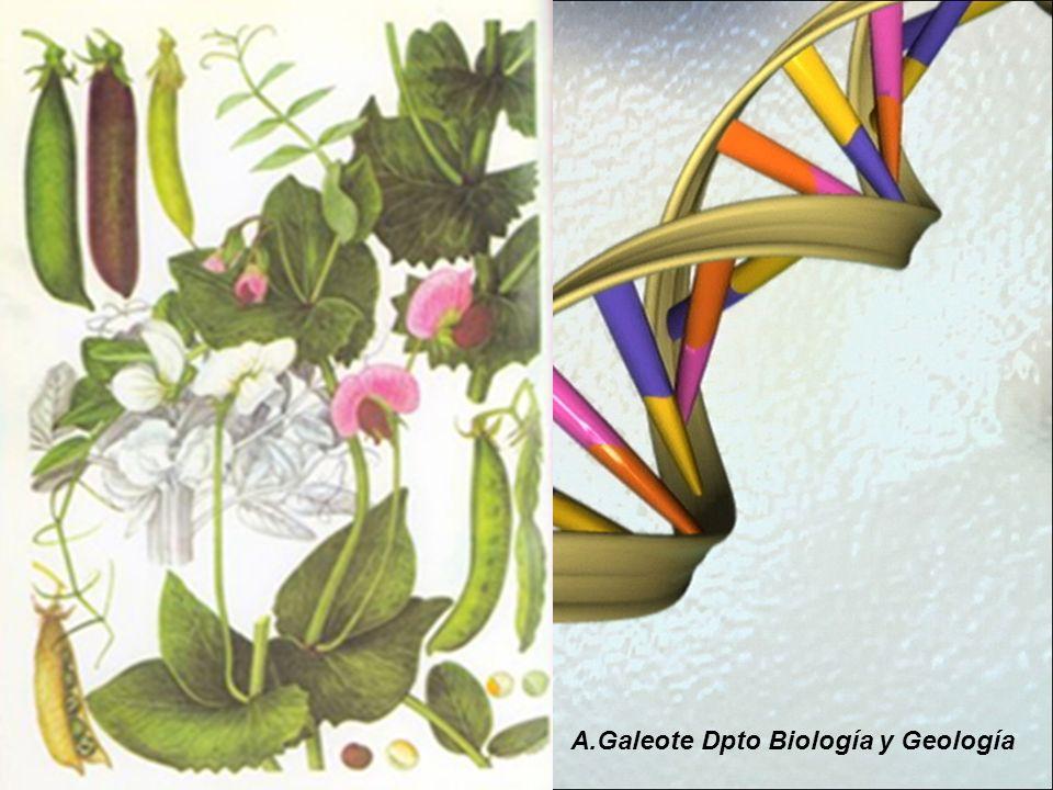 A.Galeote Dpto Biología y Geología