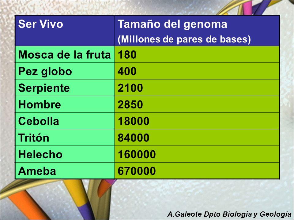 Ser Vivo Tamaño del genoma Mosca de la fruta 180 Pez globo 400