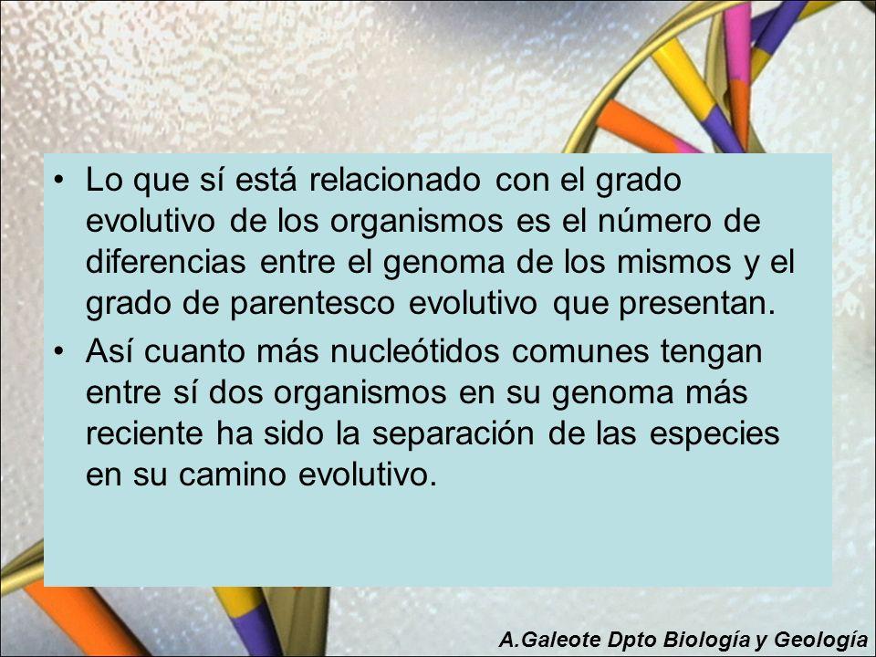 Lo que sí está relacionado con el grado evolutivo de los organismos es el número de diferencias entre el genoma de los mismos y el grado de parentesco evolutivo que presentan.