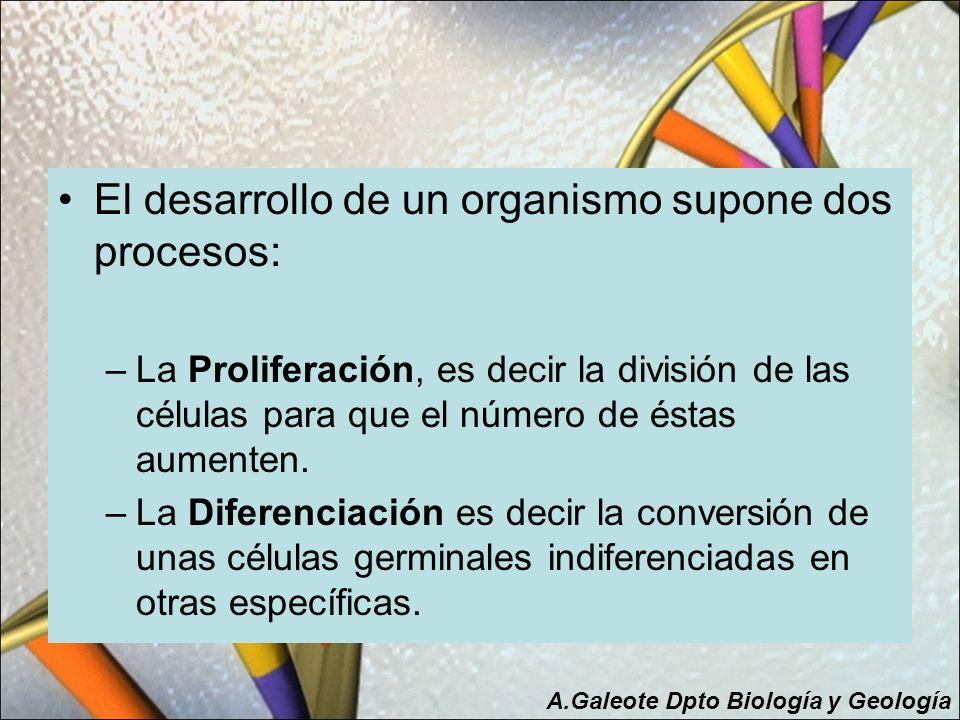 El desarrollo de un organismo supone dos procesos: