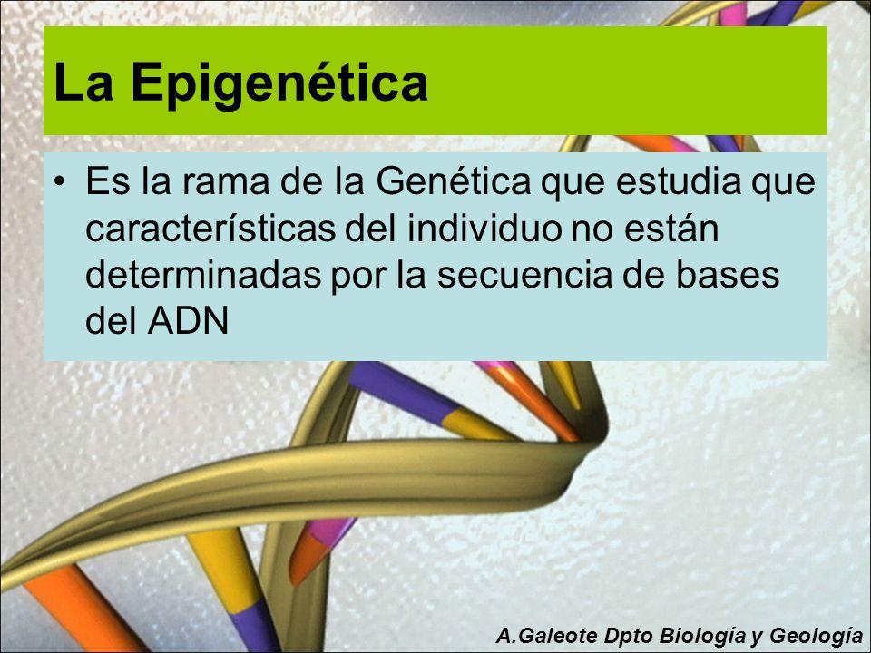 La Epigenética Es la rama de la Genética que estudia que características del individuo no están determinadas por la secuencia de bases del ADN.