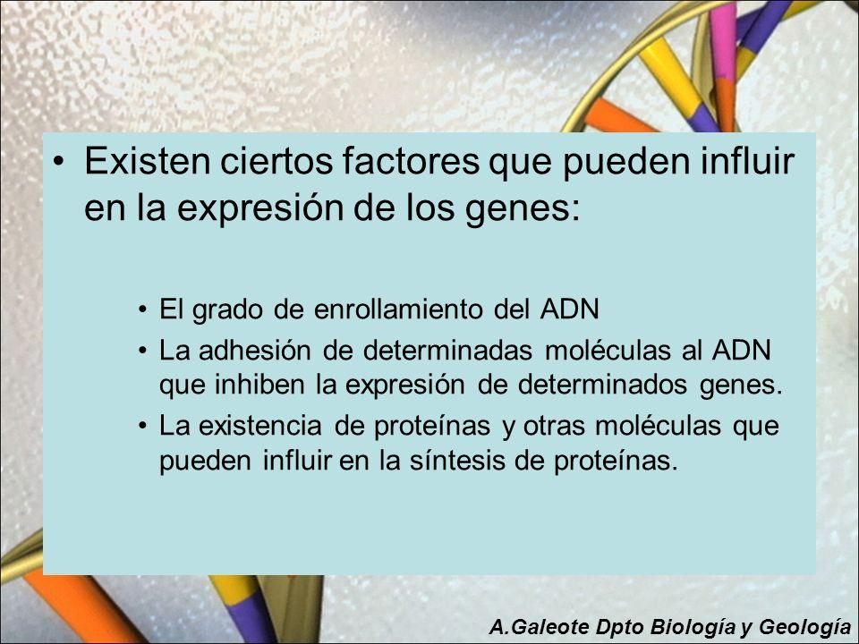 Existen ciertos factores que pueden influir en la expresión de los genes: