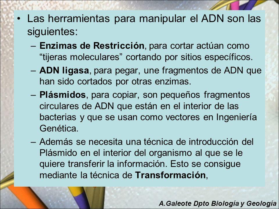 Las herramientas para manipular el ADN son las siguientes: