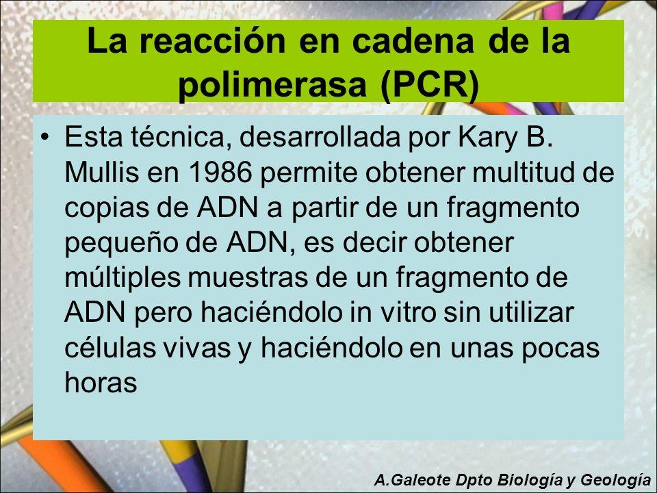 La reacción en cadena de la polimerasa (PCR)