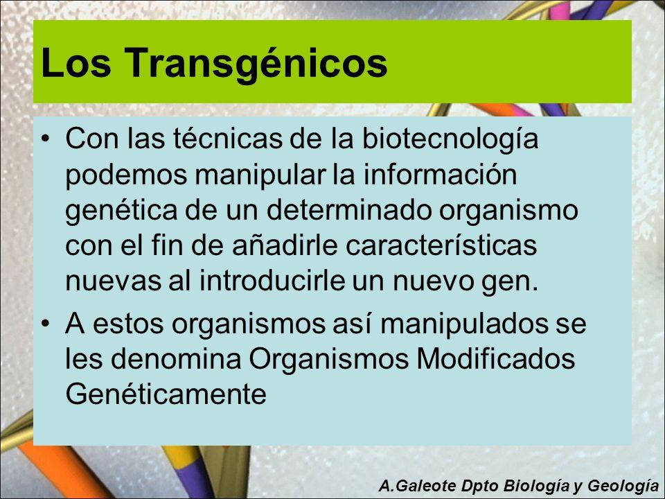 Los Transgénicos