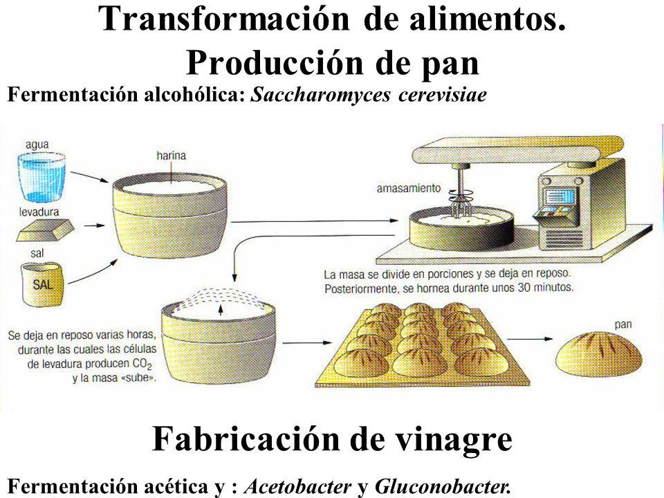 Transformación de alimentos. Producción de pan