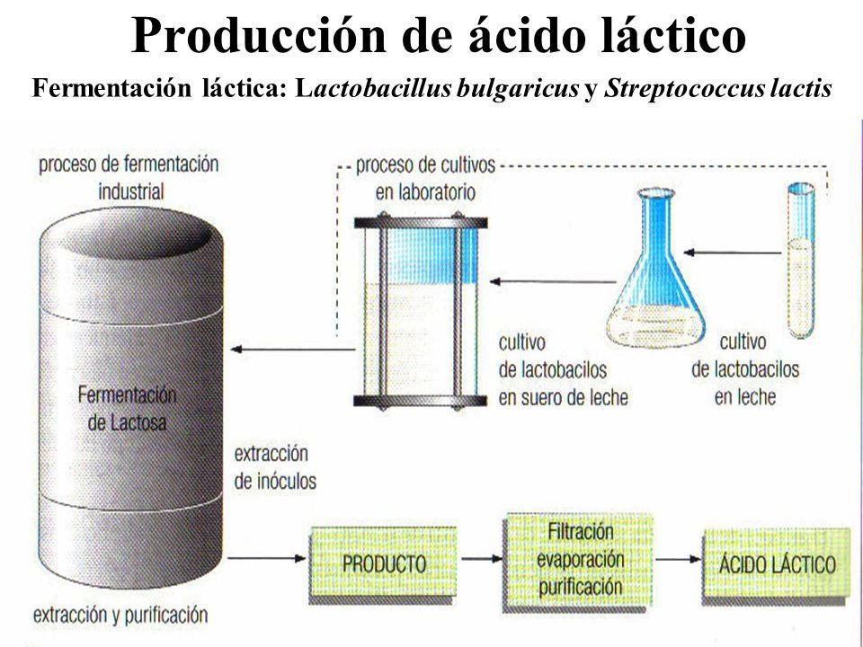 Producción de ácido láctico