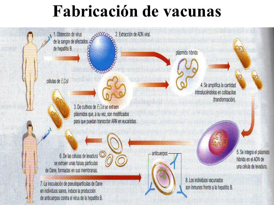 Fabricación de vacunas