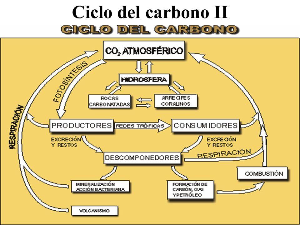 Ciclo del carbono II