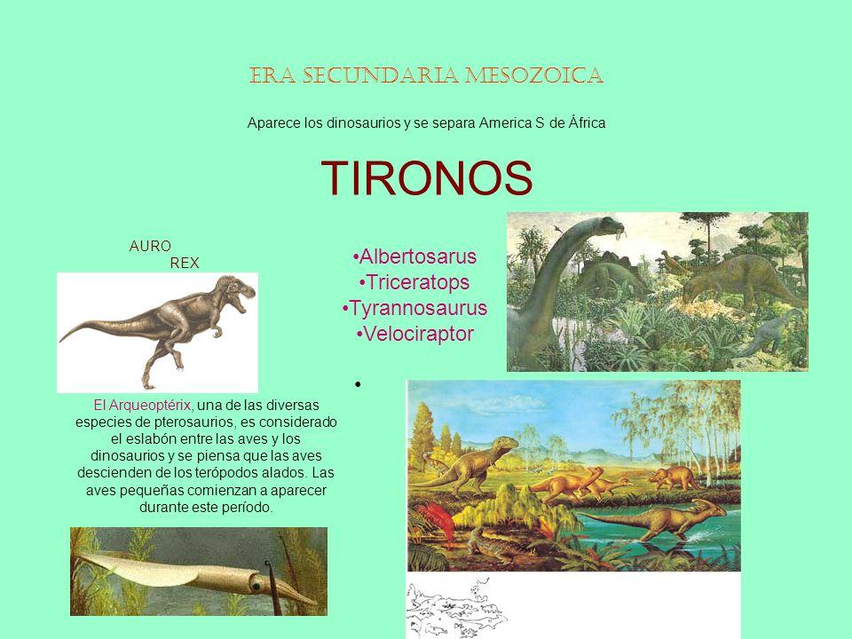 Era Secundaria Mesozoica Aparece los dinosaurios y se separa America S de África TIRONOS