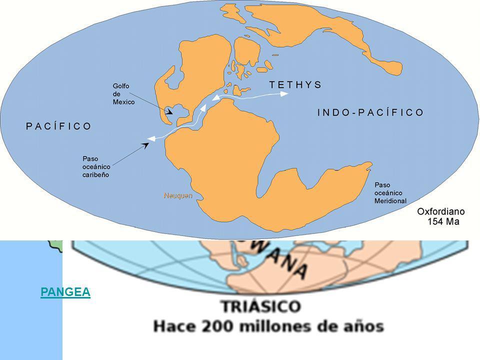 Según la teoría de Wegener hace 200 millones de años todos los continentes estaban unidos en una única masa continental: PANGEA.