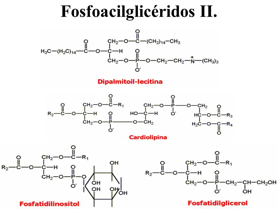 Fosfoacilglicéridos II.