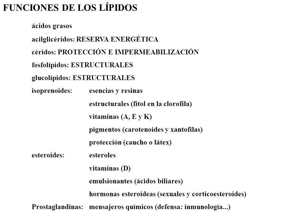 FUNCIONES DE LOS LÍPIDOS ácidos grasos