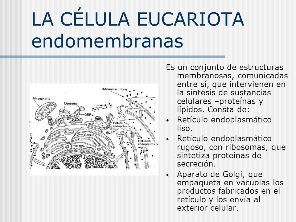 LA CÉLULA EUCARIOTA endomembranas