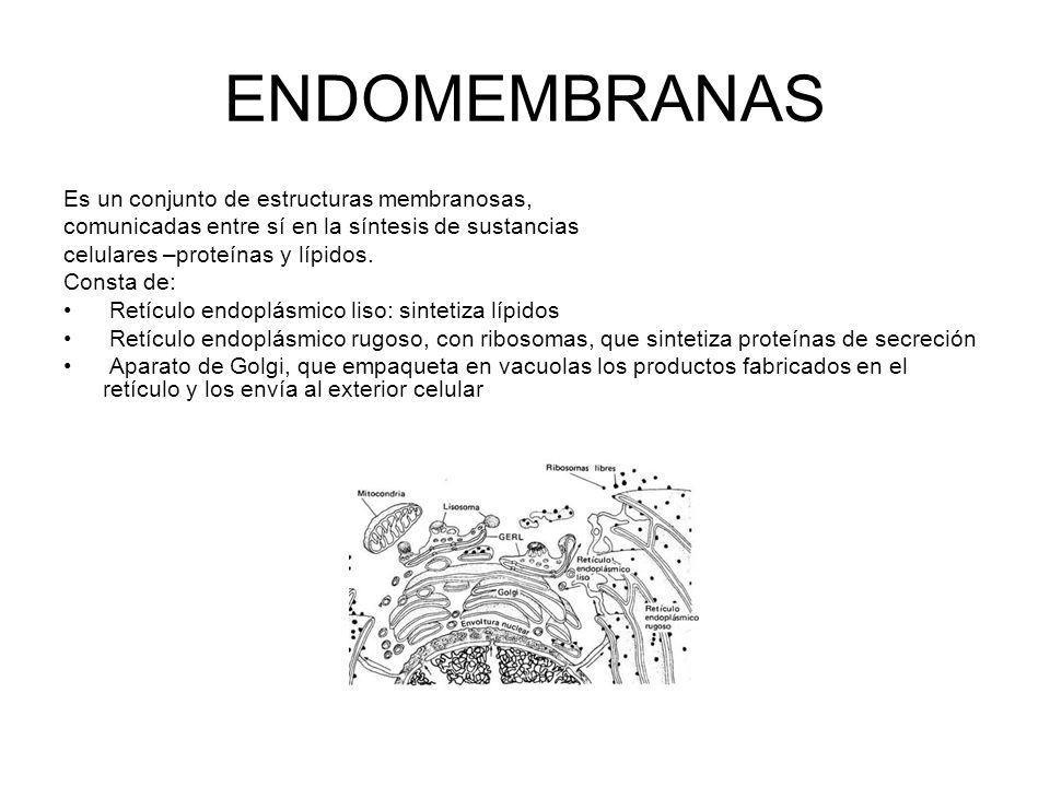 ENDOMEMBRANAS Es un conjunto de estructuras membranosas,