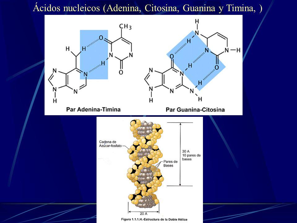 Ácidos nucleicos (Adenina, Citosina, Guanina y Timina, )