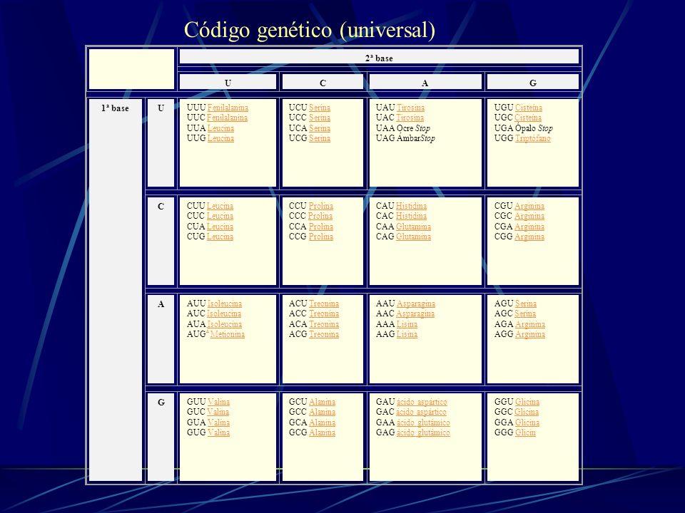 Código genético (universal)