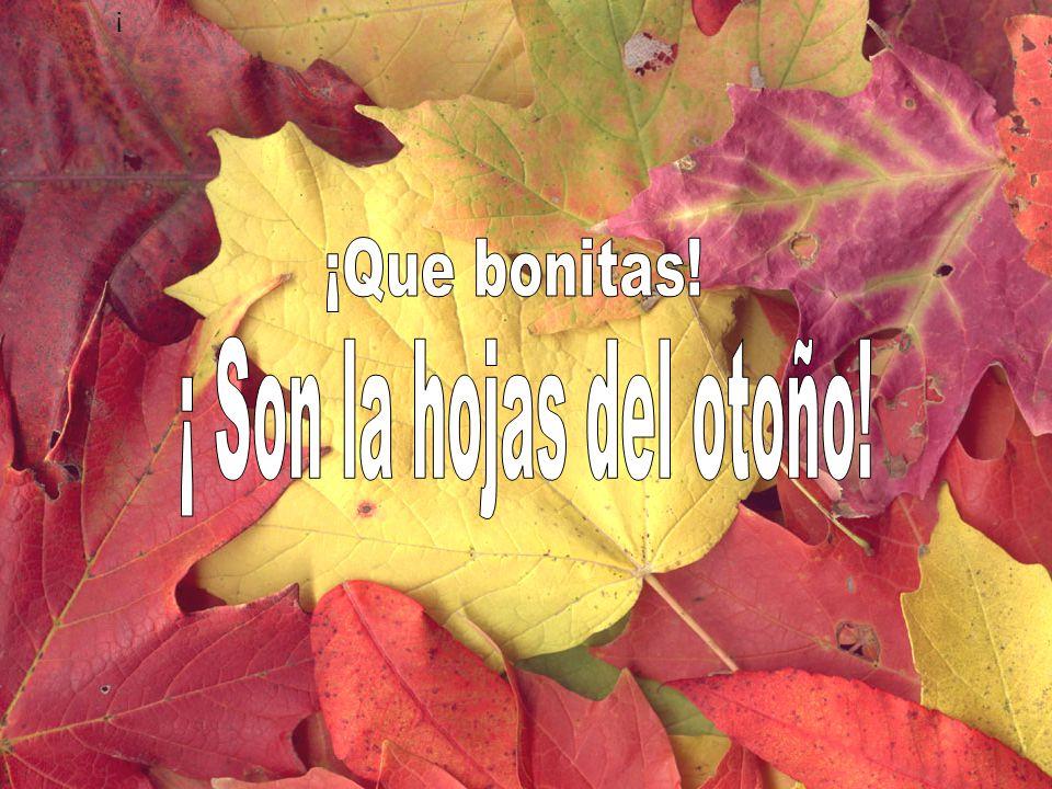 ¡ ¡Que bonitas! ¡ Son la hojas del otoño!
