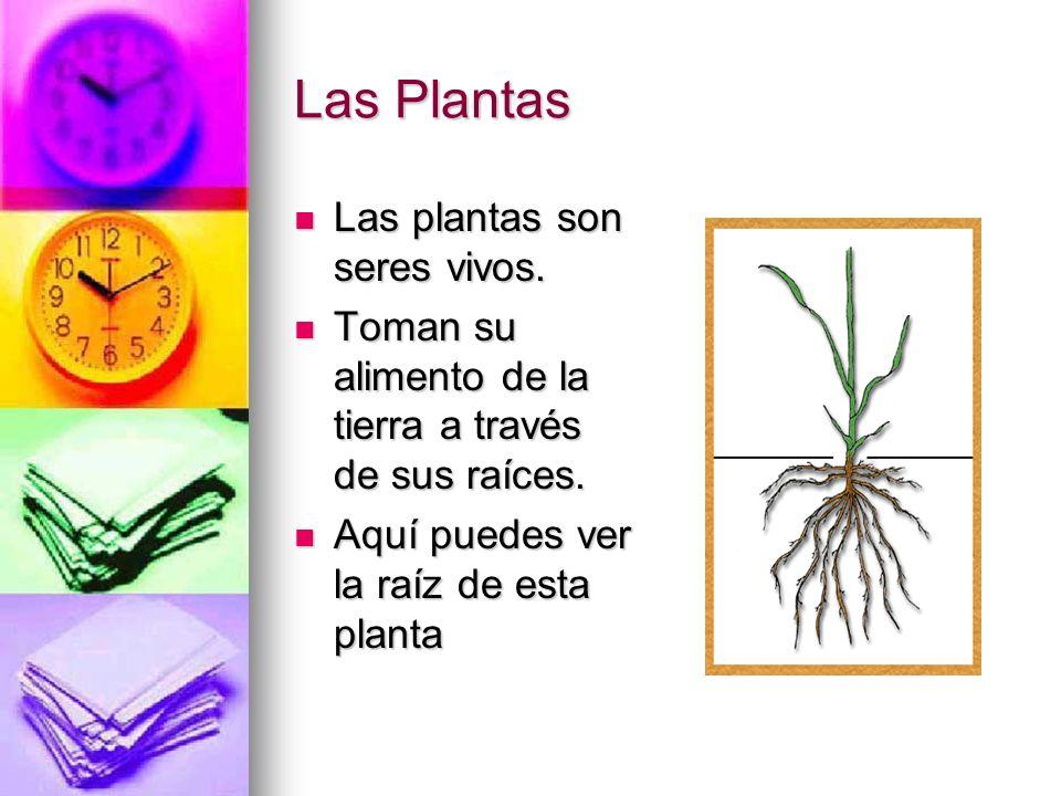 Las Plantas Las plantas son seres vivos.