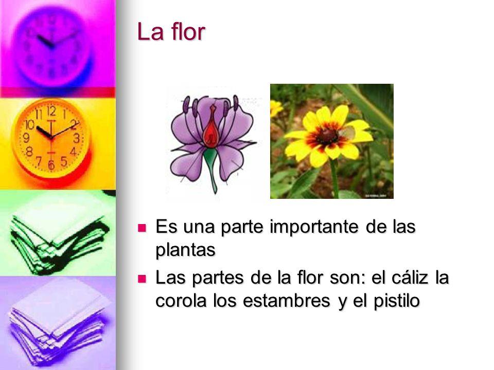 La flor Es una parte importante de las plantas