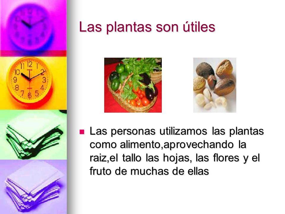 Las plantas son útiles