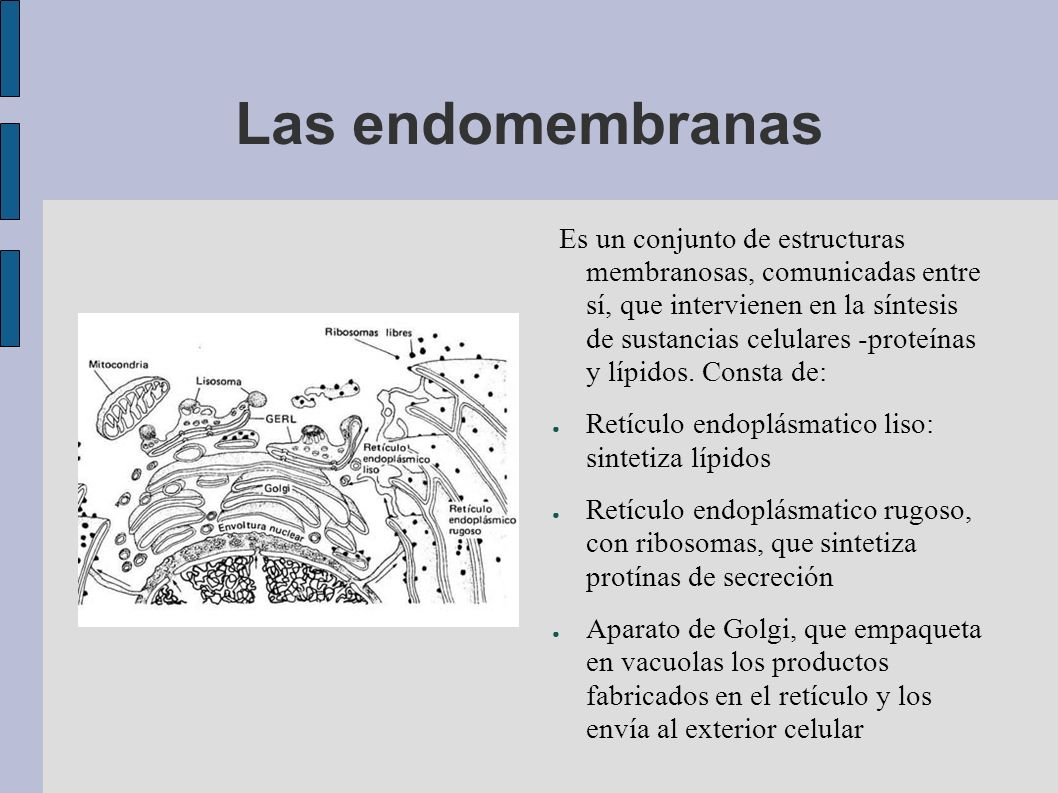 Las endomembranas