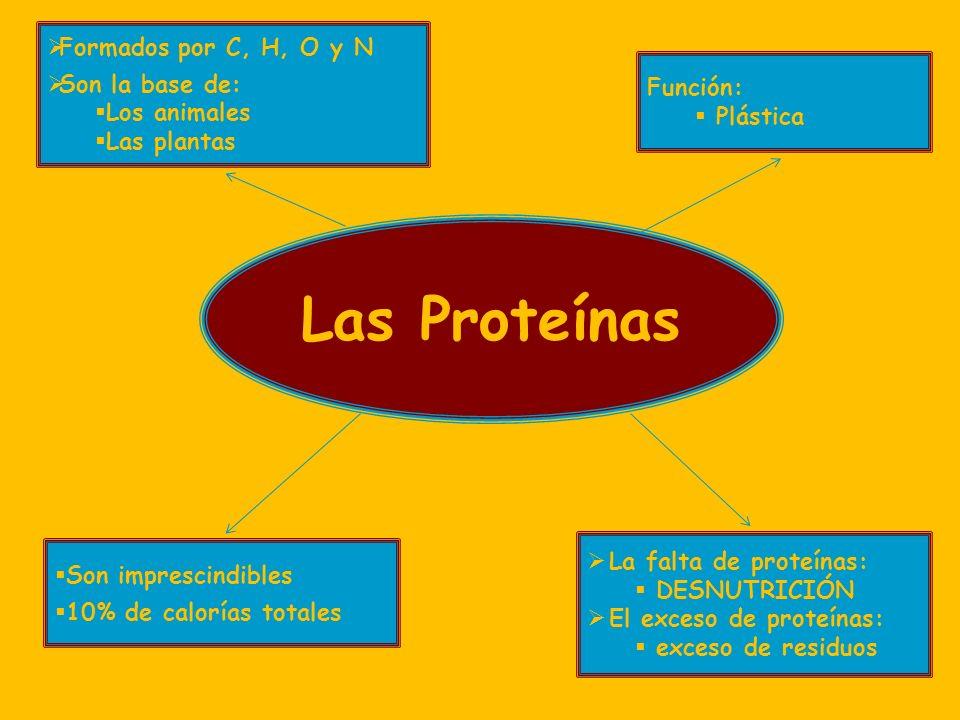 Las Proteínas Formados por C, H, O y N Son la base de: Los animales